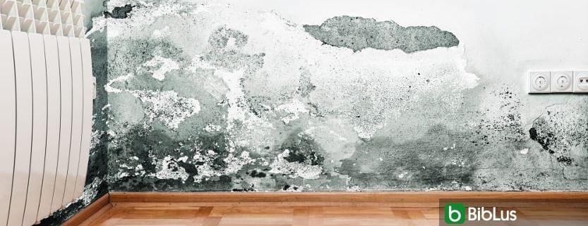 Mold risk formation assessment
