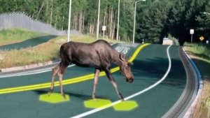 example sensors solar roadway hazard