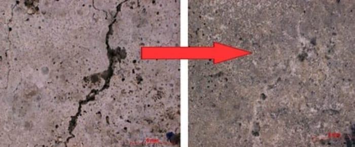 l'image montre une photo avec 2 images, une avec une fissure dans un beton arme l'autre avec la fissure régénérer -Dans le cadre du béton auto- régénérant, elle permet de créer de la calcite, cristalline du carbonate naturel de calcium, afin de boucher les pores du béton. Sa durée de vie est donc prolongée car elle protège les bâtiments contre l'eau et les autres substances néfaste pour le matériau . La bactérie est cultivée à partir du bouillon de culture qui est composé de levure, d'urée et de minéraux. Les chercheurs ont incorporés cette bactérie au béton car elle y trouve sa source principale de nourriture. Elle se multiplie et fait ainsi fonction de bouches-pores dans le but de prévenir les détériorations.